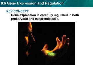 KEY CONCEPT  Gene expression is carefully regulated in both prokaryotic and eukaryotic cells.