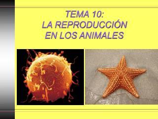 TEMA 10:  LA REPRODUCCIÓN  EN LOS ANIMALES