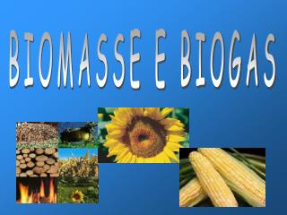 BIOMASSE E BIOGAS