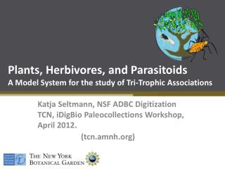 Plants, Herbivores, and Parasitoids A Model System for the study of Tri-Trophic Associations