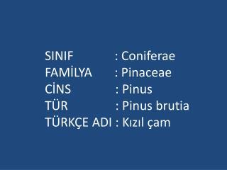 SINIF             : Coniferae FAMİLYA       : Pinaceae CİNS              : Pinus