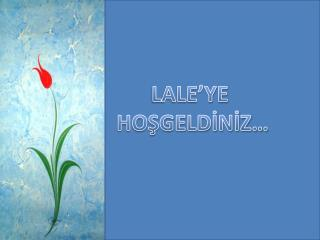 LALE'YE  HOŞGELDİNİZ…
