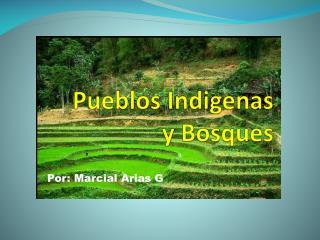 Pueblos Indigenas  y Bosques