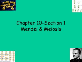 Chapter 10-Section 1 Mendel & Meiosis