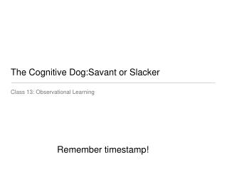 The Cognitive Dog:Savant or Slacker