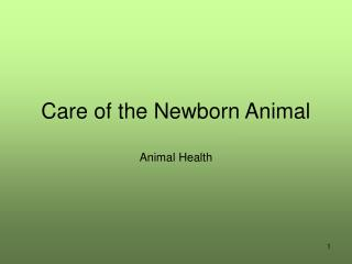 Care of the Newborn Animal