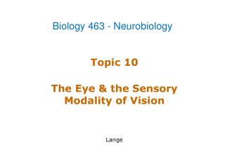 Topic 10 The Eye & the Sensory Modality of Vision Lange
