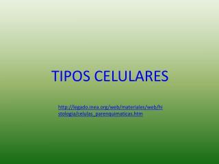 TIPOS CELULARES
