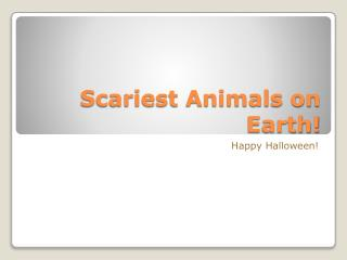 Scariest Animals on Earth!
