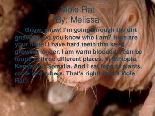 Mole Rat By: Melissa