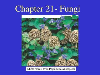 Chapter 21- Fungi