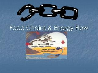 Food Chains & Energy Flow