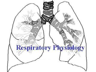 Part 1 Structure and Function of the Respiratory System