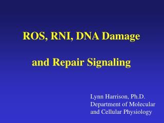 ROS, RNI, DNA Damage and Repair Signaling