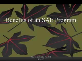 Benefits of an SAE Program