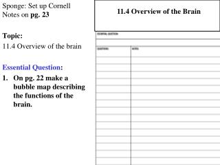 Sponge: Set up Cornell Notes on  pg. 23 Topic:  11.4 Overview of the brain Essential Question :
