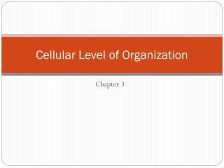 Cellular Level of Organization