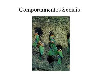 Comportamentos Sociais