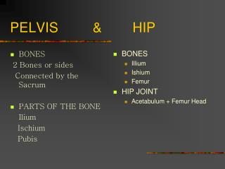 PELVIS         &        HIP