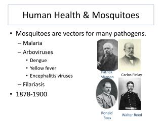 Human Health & Mosquitoes