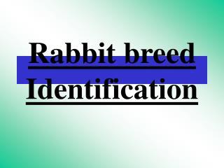 Rabbit breed Identification