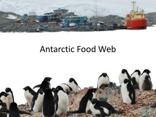 Antarctic Food Web