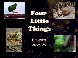Four  Little  Things