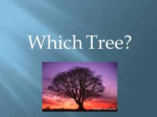 Which Tree?