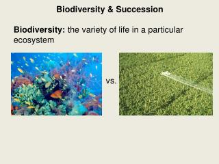 Biodiversity & Succession Biodiversity: the variety of life in a particular ecosystem