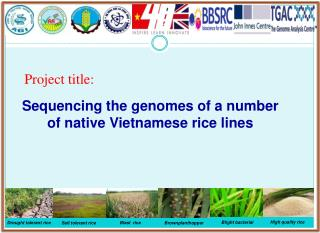 Sequencing the genomes of a number of native Vietnamese rice lines