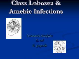 Entamoeba histolytica E. coli E. gingivalis