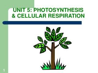 UNIT 5: PHOTOSYNTHESIS & CELLULAR RESPIRATION