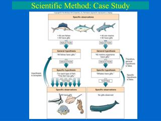 Scientific Method: Case Study