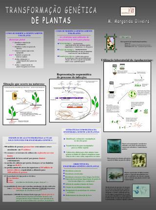 TRANSFORMAÇÃO GENÉTICA DE PLANTAS