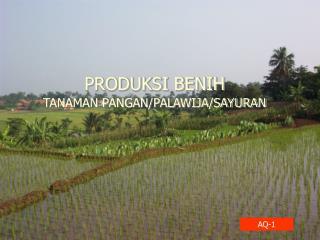 PRODUKSI BENIH TANAMAN PANGAN/PALAWIJA/SAYURAN