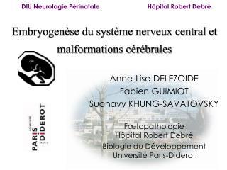Embryogenèse du système nerveux central et malformations cérébrales