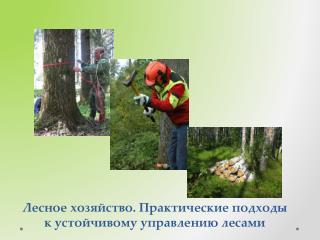 Лесное хозяйство. Практические подходы к устойчивому управлению лесами