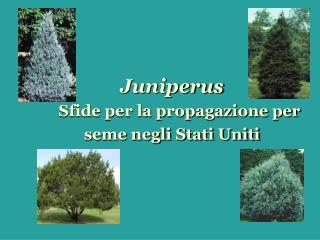 Juniperus Sfide per la propagazione per seme negli Stati Uniti