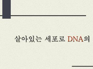 살아있는 세포로  DNA 의 도입