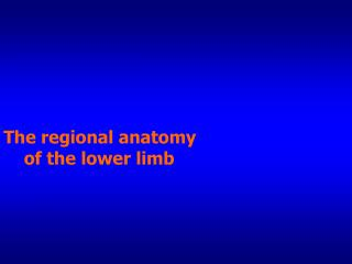 The regional anatomy      of the lower limb