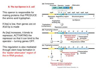 B. The  trp  Operon in  E. coli