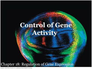 Control of Gene Activity