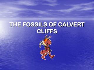 THE FOSSILS OF CALVERT CLIFFS