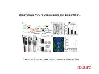 D Dulcis & NC Spitzer Nature 456 , 195-201 (2008) doi:10.1038/nature07569