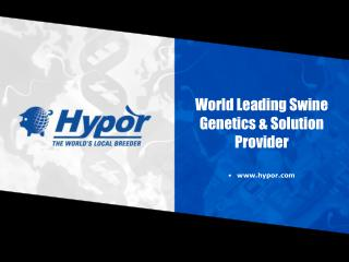 World Leading Swine Genetics  Solution Provider