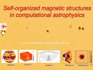 Self-organized magnetic structures in computational astrophysics