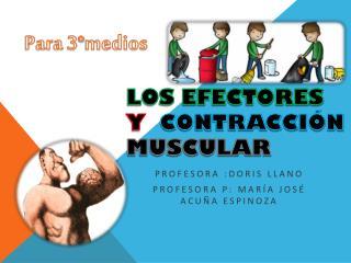 Los efectores  y   Contracción Muscular