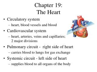 Chapter 19:  The Heart