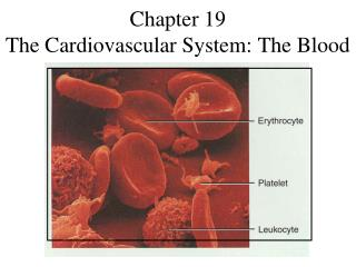 Chapter 19 The Cardiovascular System: The Blood