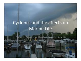 Cyclones and the affects on Marine Life